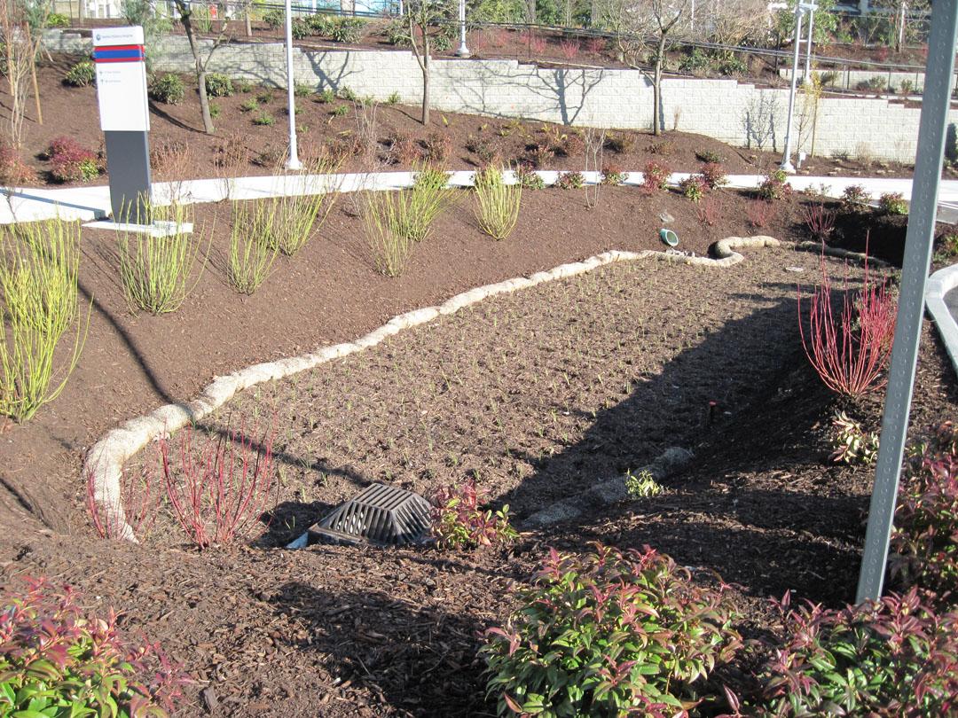 Seattle Childrens Hospital Rain Gardens Hart Crowser Blog