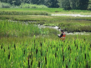 Edmonds Wetland 033